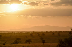 Sunset over the savanna Royalty Free Stock Image