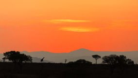 Sunset over the savannah Royalty Free Stock Image