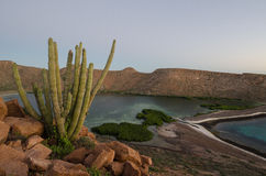 Sunset over the sea of cortez, baja california Royalty Free Stock Photography