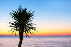 Sunset over sea with palm trees panorama. Golden colorful sunset over sea coast with palm tree silhouette panoramic holiday vacation background Royalty Free Stock Images