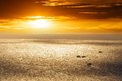 Sunset over sea and shell farm Royalty Free Stock Images