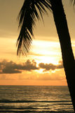 Sunset over the sea, Thailand. Silhouette palm tree over a sunset over the sea, Thailand Stock Photography