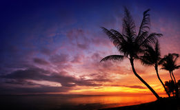 Sunset over the sea with tropical palm trees. Silhouette, sky background Stock Image