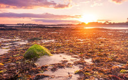 Sunset over seaweed Royalty Free Stock Photo