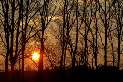Sunset over tree stock photo