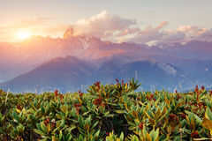 Sunset over snow-capped mountain peaks.  Stock Photography