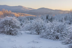 Sunset over the snow-capped mountains. South of quebec and the north of vermont are here interspersed, in this beautiful winter landscape. The apple trees in Stock Photography