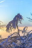 Sunset over snow-covered forest. On the Feldberg in the Taunus mountains Royalty Free Stock Photo