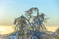 Sunset over snow-covered forest. On the Feldberg in the Taunus mountains Stock Image