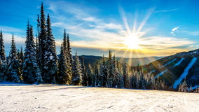 Sunset over the Snow covered trees in the winter landscape of the high alpine at the ski resort of Sun Peaks royalty free stock photos