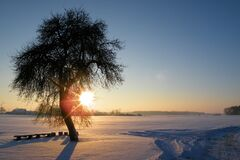 Sunset over snowy field with tree Royalty Free Stock Image