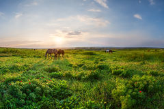 Sunset over spring meadow Royalty Free Stock Image