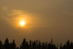 Sunset over spruce forest Royalty Free Stock Photos