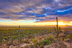 Sunset. Over suburb of Tucson royalty free stock photo