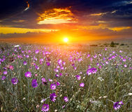 Sunset over summer meadow Royalty Free Stock Photo