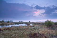Sunset over swamp in summer Royalty Free Stock Images