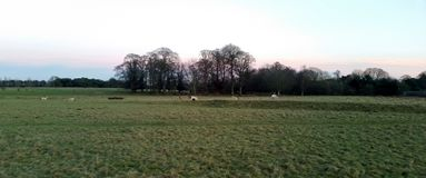 Sunset over the Tatton Park with herd of deer in background - Tatton Park Gardens. Knutsford, United Kingdom Stock Photography