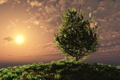 Sunset Over Tree On Hillside Stock Photos