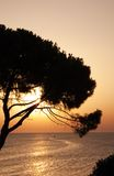 Sunset over tree and sea Royalty Free Stock Images