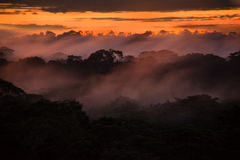 Sunset over trees of Amazon  basin. Orange glow of sunset above trees of Amazon basin  shrouded in fog or mist Stock Photos