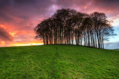Sunset over Trees Royalty Free Stock Image