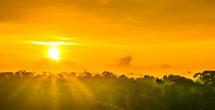 Sunset over the trees in the brazilian rainforest of Amazonas royalty free stock photography
