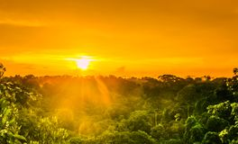 Sunset over the trees in the brazilian rainforest of Amazonas. View on sunset over the trees in the brazilian rainforest of Amazonas royalty free stock photography