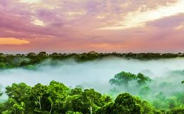 Sunset over the trees in the brazilian rainforest of Amazonas royalty free stock photos