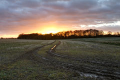 Sunset over trees in an english field Stock Images