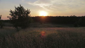 Sunset over the trees. The orange sun is setting behind the horizon in the background silhouette of trees stock video