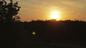 Sunset over the trees. The orange sun is setting behind the horizon in the background silhouette of trees stock video footage