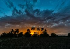 Sunset over tress palm trees in Spain. Sunset over three palm trees in Spain with clouds stock photos