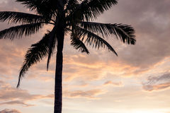 Sunset over the tropical beach. Stock Image