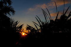 Sunset over tropical jungle Stock Photography