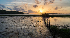 Sunset Over a Tropical Lake Royalty Free Stock Image
