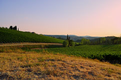Sunset over Tuscan countryside - Italy. Romantic sunset over the vineyards in the Chianti region in Tuscany Royalty Free Stock Photos