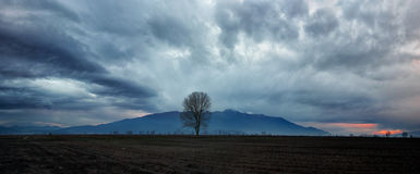 Sunset over the valley. Ominous cloud formation with a lonely tree on the foreground royalty free stock photos