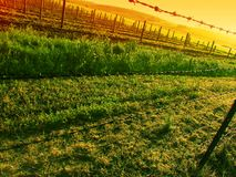 Sunset over Vineyard Stock Image