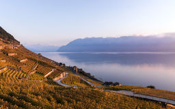 Sunset over the vineyard terraces in Lavaux, Geneva Lake and Alps Mountains Stock Images
