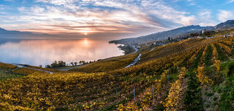 Sunset over the vineyard terraces in Lavaux, Geneva Lake, Switzerland Stock Image