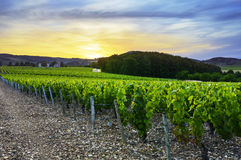 Sunset over vineyards of Beaujolais, Rhone, France stock photography