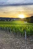 Sunset over vineyards of Beaujolais, Rhone, France Stock Images