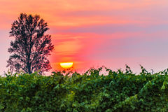 Sunset over the vineyards Stock Images
