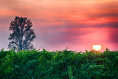 Sunset over the vineyards. Fiery sunset over the vineyards Stock Image