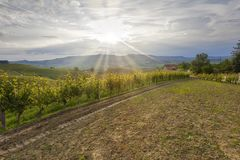 Sunset over the vineyards. Color image stock images