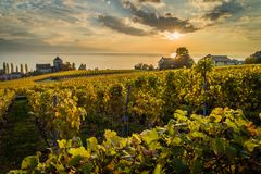 Sunset over vineyards in Lutry. Sunset over geneva lake and vineyards in Lutry, close to Lausanne, with yellow autumn colors Stock Image