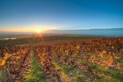 Sunset over the vineyards. The sun setting down over coloful vineyards near Geneva, Switzerland royalty free stock photos