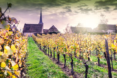 Sunset over vineyards of wine route. France, Alsace. Sunset over autumn vineyards of wine route. France, Alsace Stock Photos