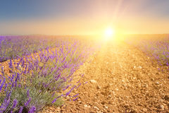 Sunset over a violet. Stock Photos