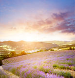 Sunset over a violet. Royalty Free Stock Photos